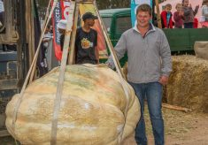 532,4 kg pumpkin crowned champion in Heidelberg