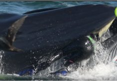 """PE man's incredible story makes global headlines: """"I was spat out by a whale!"""""""