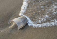 Plett vs Plastic: Top tourist destination joins the fight against plastic pollution