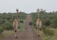 South Africa's parks dominates Best Safari Parks 2019 list