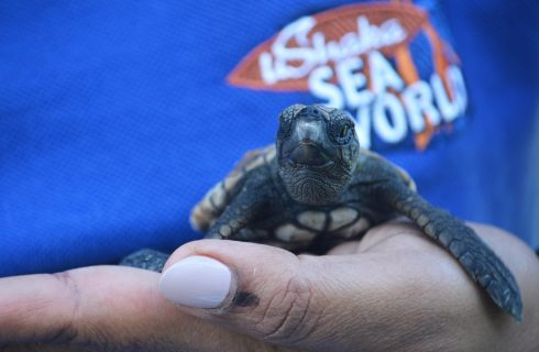 These cute little guys are on the mend, thanks to SA's turtle rescue heroes!