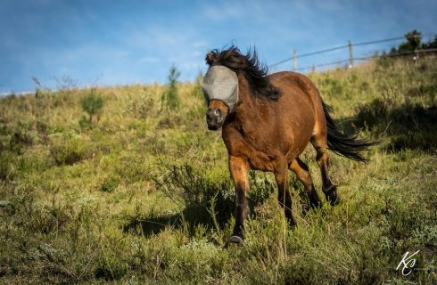 South Africa's bravest pony blazes a new trail of hope