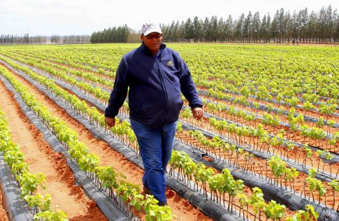 Western Cape's top agricultural employee for 2017 announced