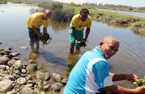 Working for Water keeps polluted Swartkops alive