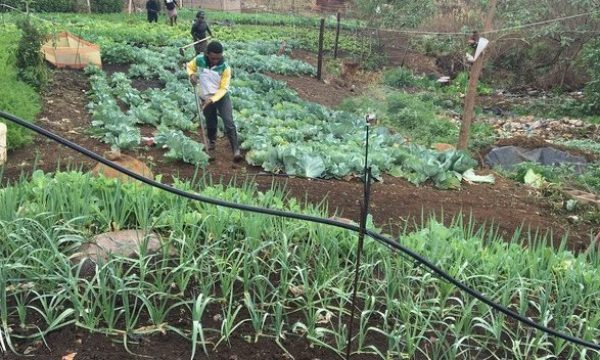 From a dumpsite to a vegetable garden