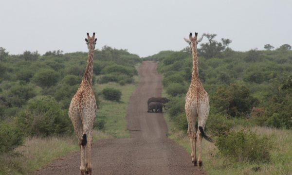 South Africa's parks dominates Best Safari Parks 2019 list
