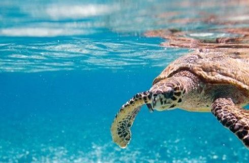 Thanda Island Saves Turtles through Partnership with Local Marine NGO