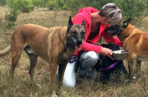 FORMER POLICE DOG GETS A FURRY TAIL ENDING THANKS TO RETREAT 2 EDEN