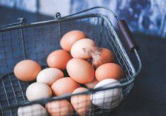 SAFCEI'S CAGE-FREE CAMPAIGN – A BIG STEP CLOSER TO ETHICAL EGG FARMING